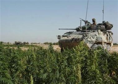 Marihuana v Afganistane (video)