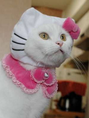 cat in hello kitty costume. A Hello Kitty costume for cats. Some people make me sick.
